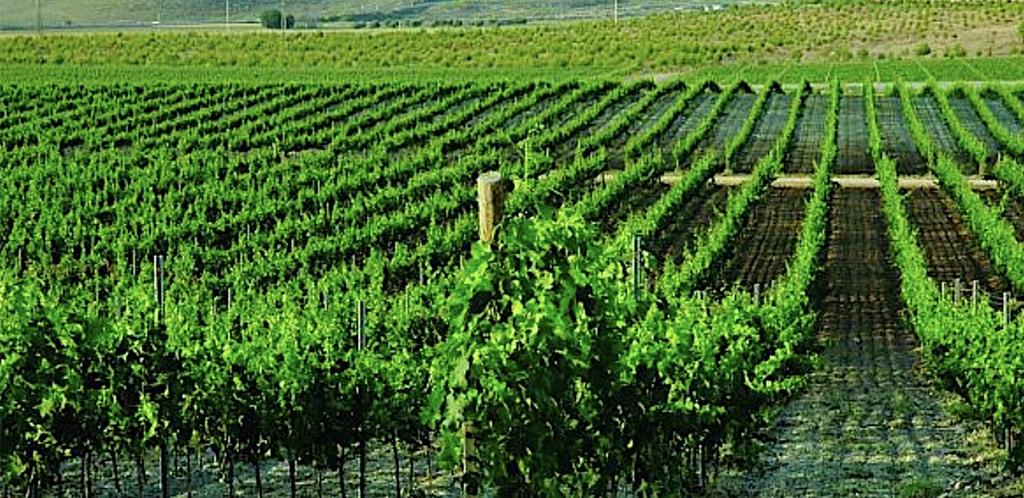La Mancha e i suoi vini