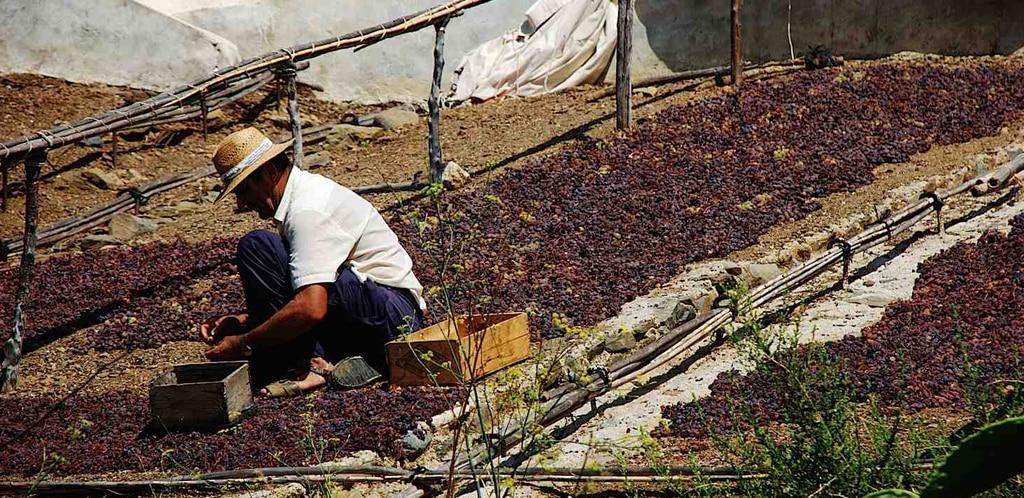 I vitigni di Andalusia e Canarie