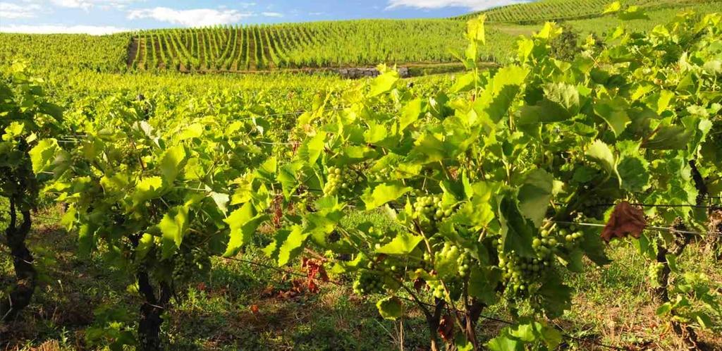 Il Jura e i suoi vini