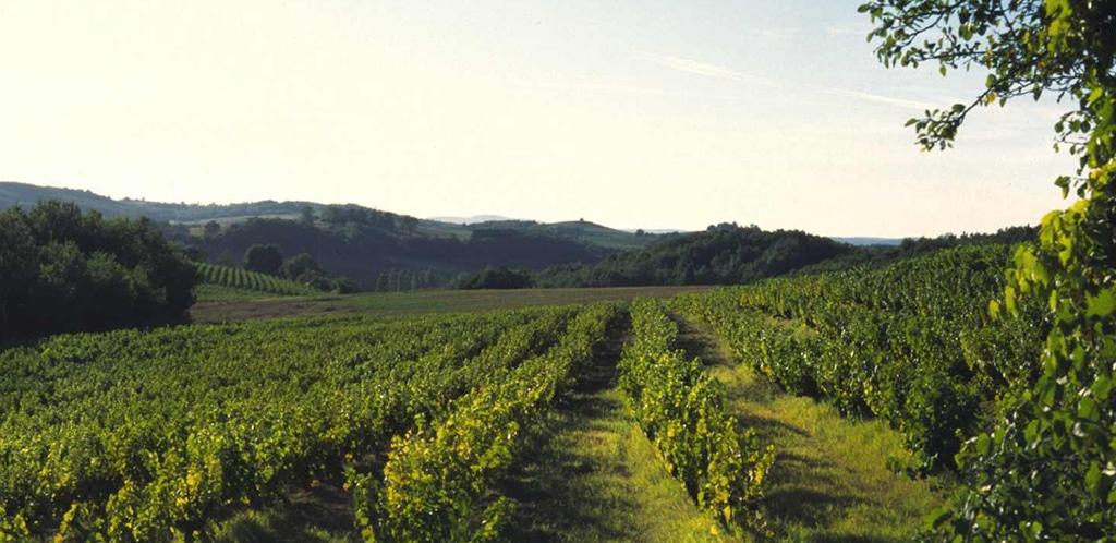 I vini del sud-ovest della Francia