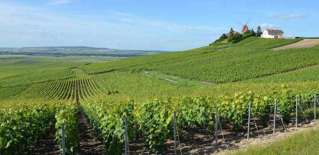 La Champagne vitivinicola