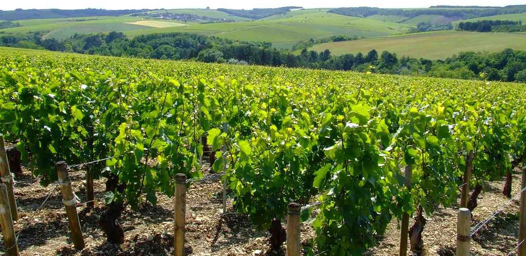 La Bassa Borgogna e i vigneti di Chablis