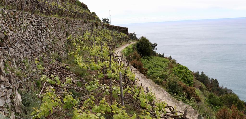 I vini della Liguria
