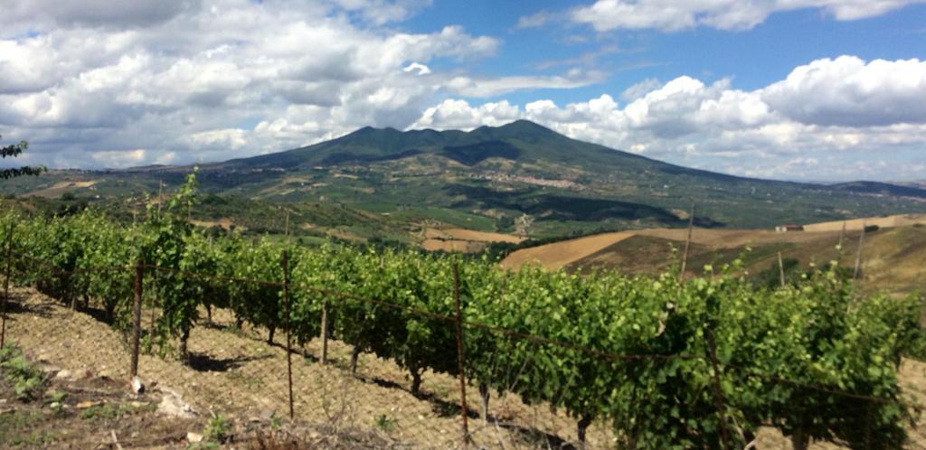 La lunga tradizione vinicola della Basilicata