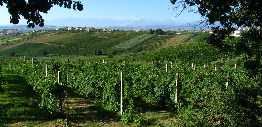 La tradizione dei vini d'Abruzzo