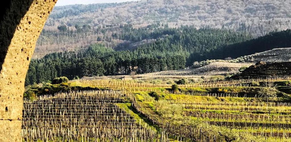 Sicilia, isola del vino