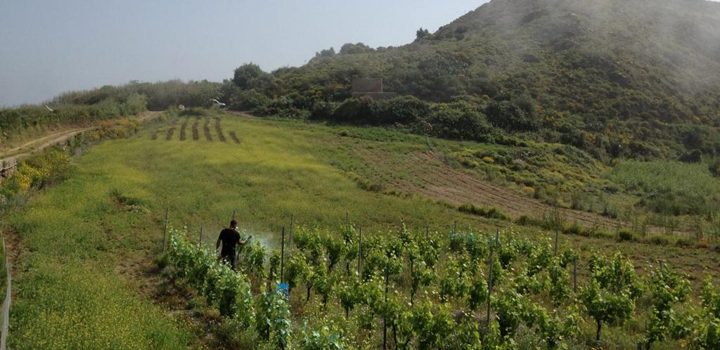 Dal più nobile dei vini siciliani