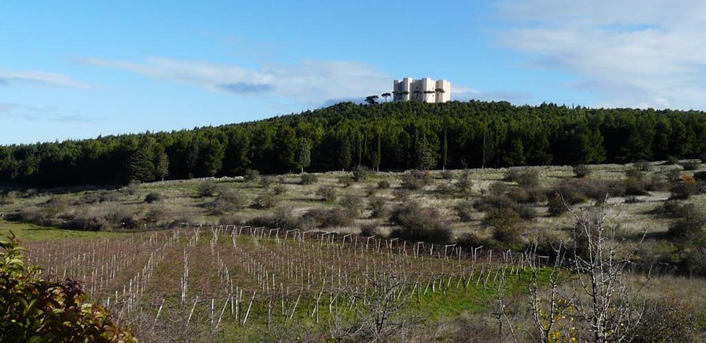 Da secoli terra di vino