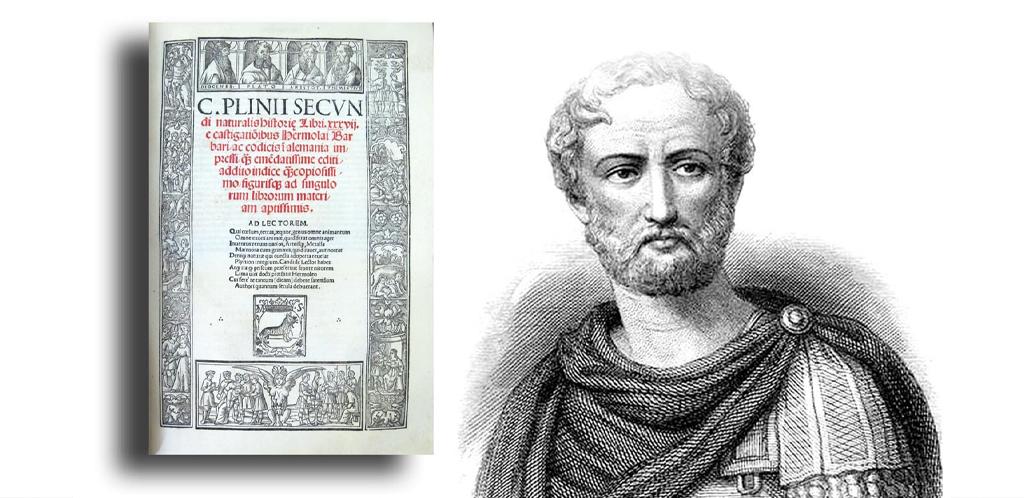 Plinio, il primo enologo