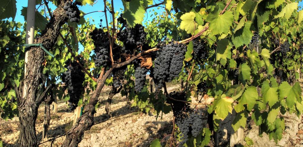 Andar per vini in Romagna