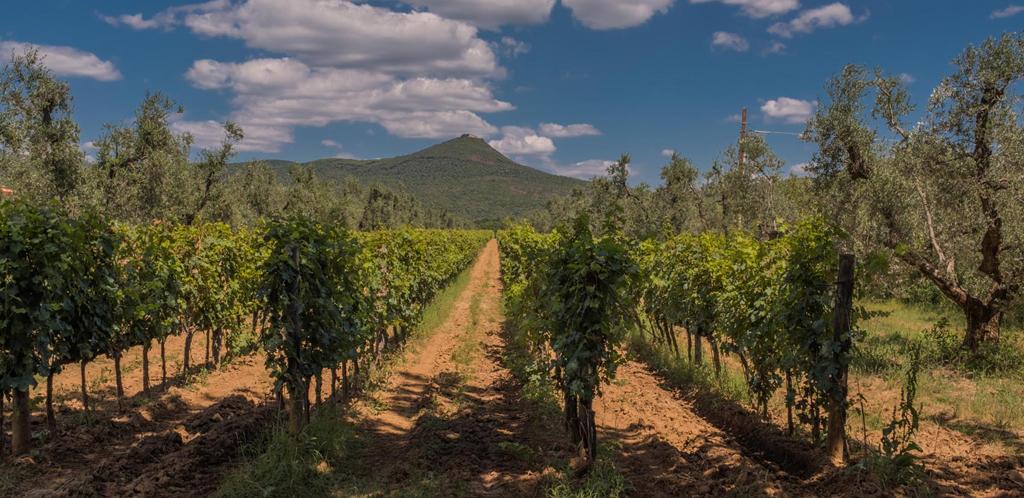 Il profumo del vino tra Livorno e la Maremma